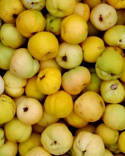 owoce eko